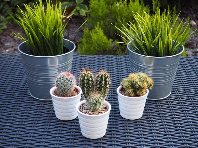 Ikea Cacti Cactus