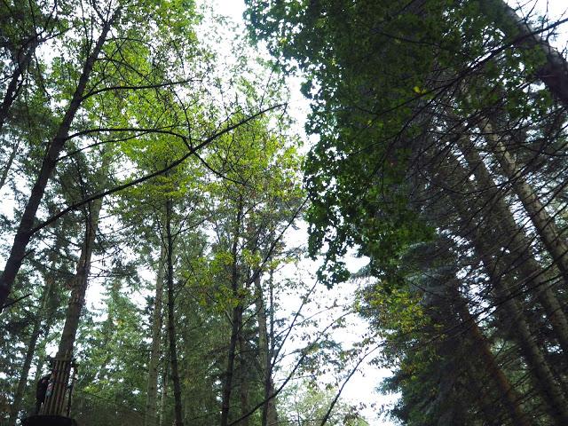 GO Ape Treetop Adventures