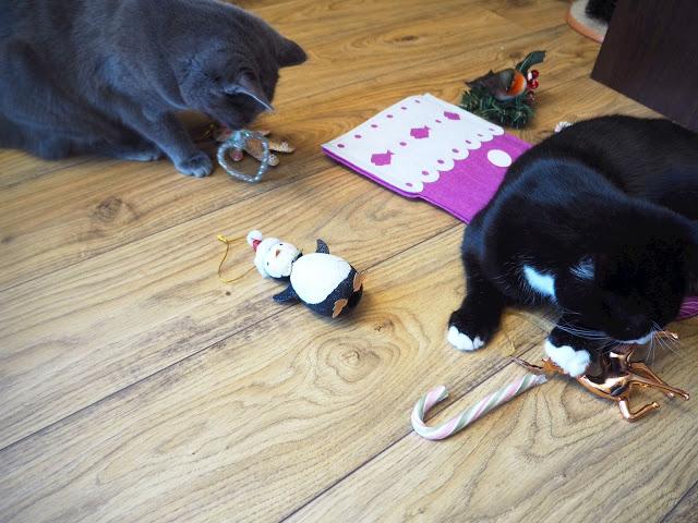 Kittens at Christmas