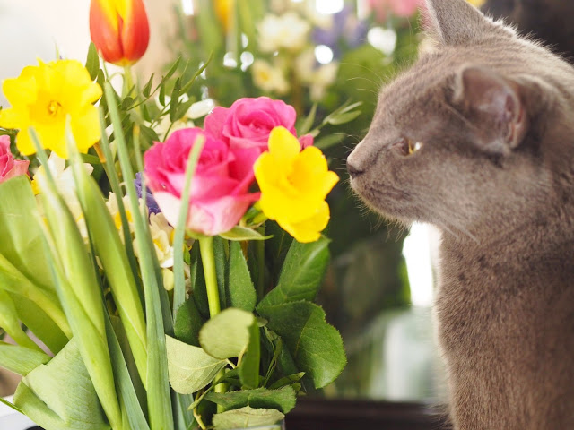 Cat smelling flowers, cute grey cat, Lifestyle Blogger