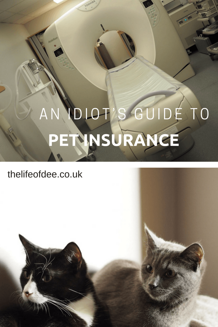 A Guide To Pet Insurance, Unsure about which pet insurance policy to go for and what cover you will need? Don't worry I've got your back, here's an Idiot's Guide To Pet Insurance to help you choose.