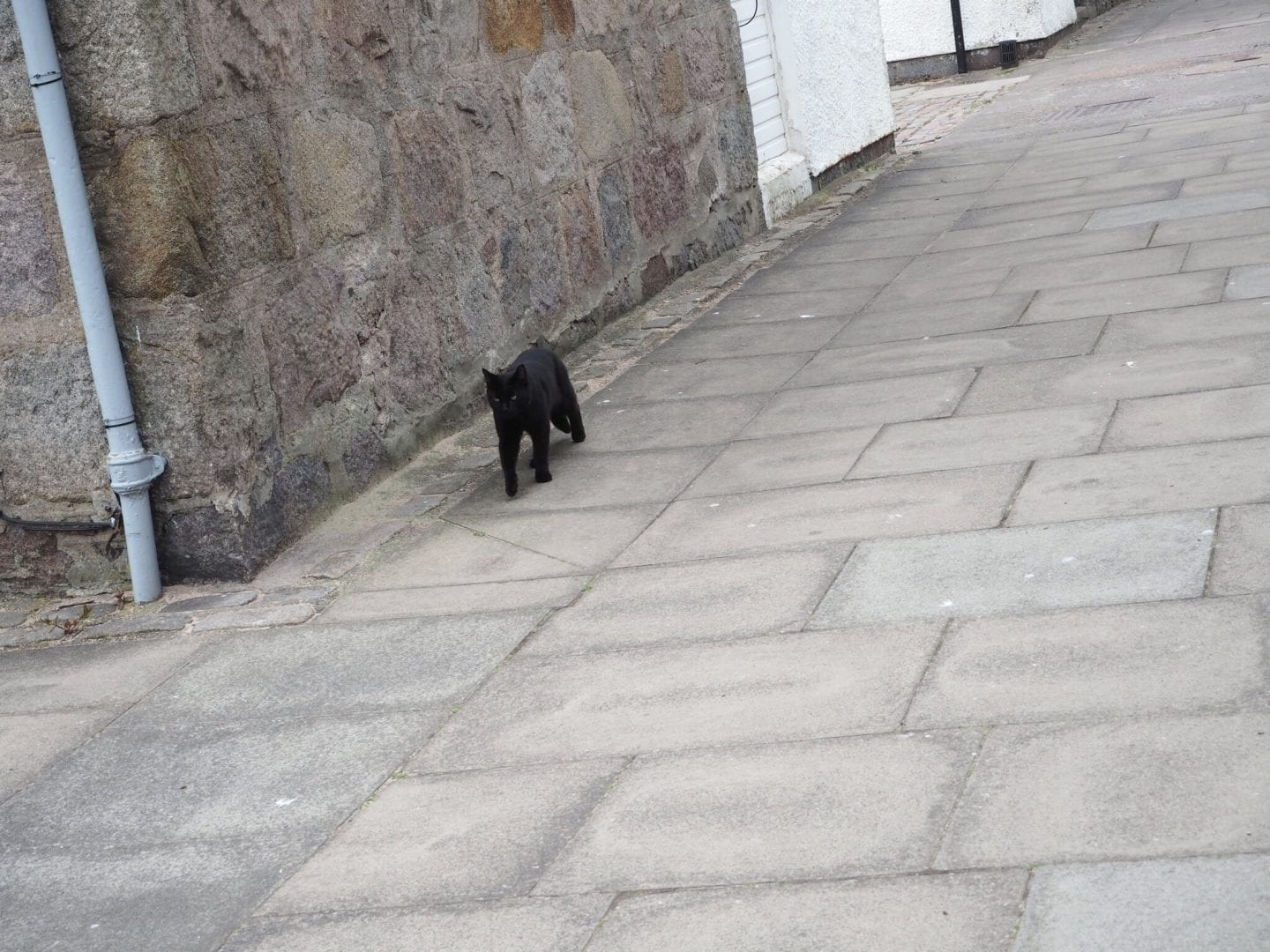 Black Cat in Footdee Aberdeen