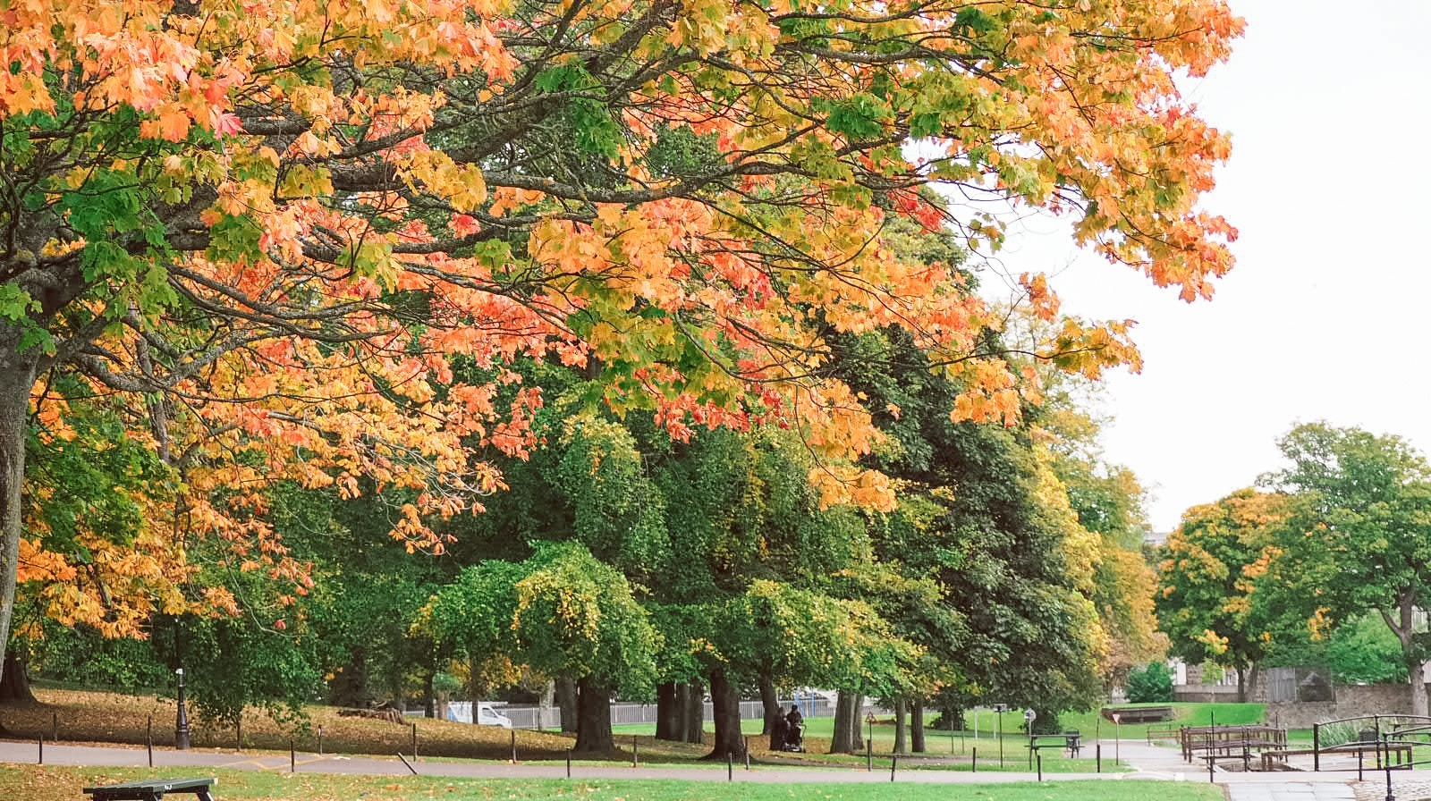 Things to do in Autumn   Take photos of nature