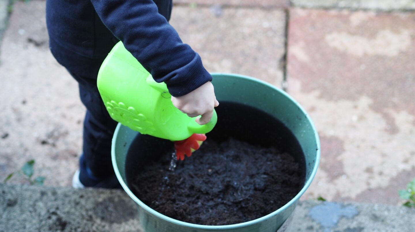 Things to do this Autumn   Plant bulbs for Spring