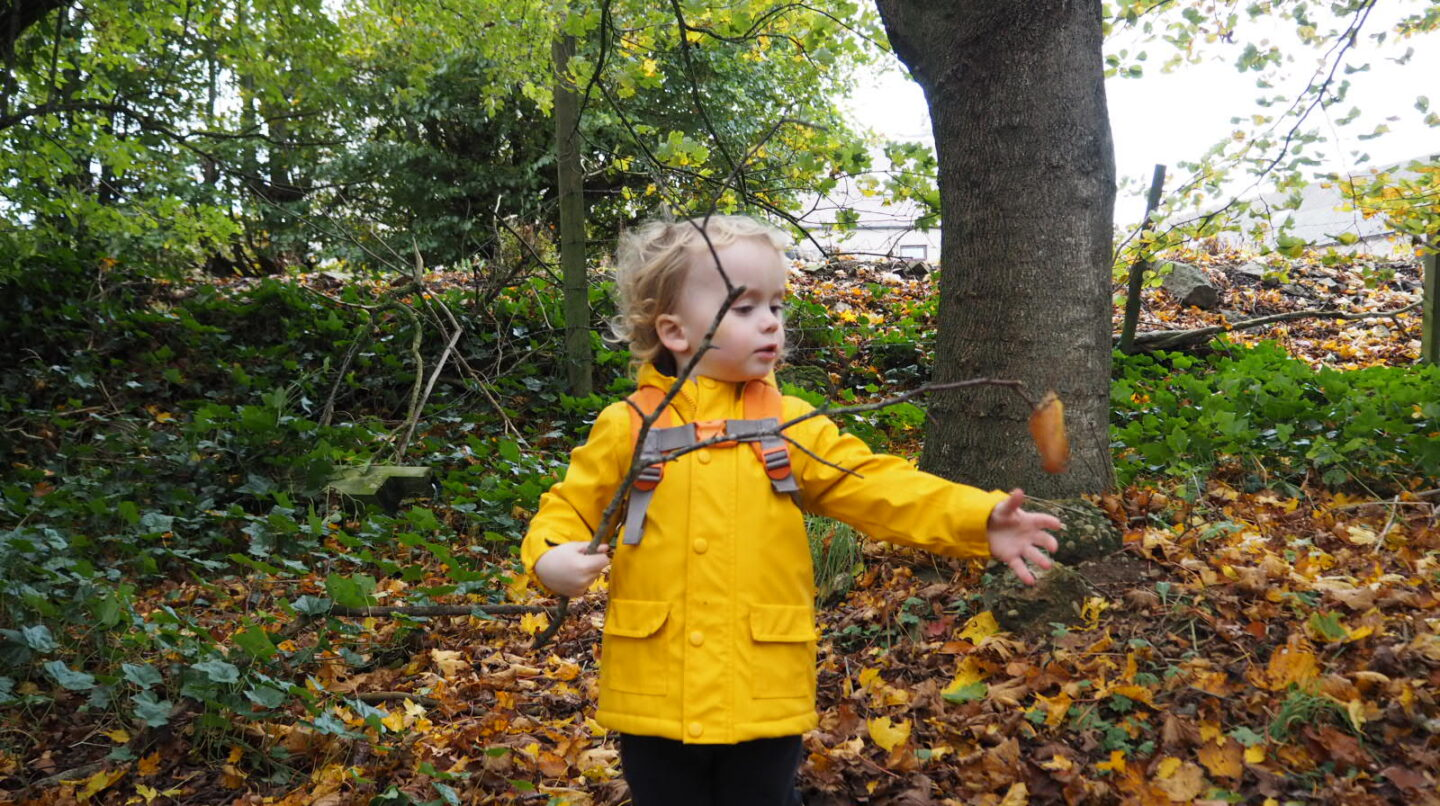 Things to do this Autumn   Woodland Walks